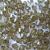 5 mm akrilinis karoliukas alyvuoginis, 100 vnt
